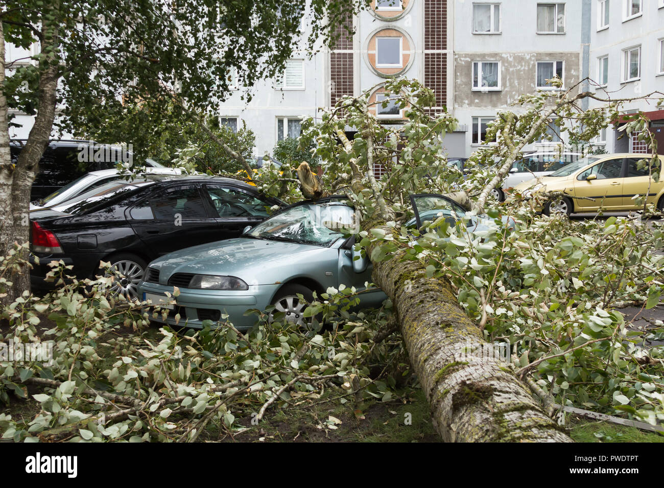 a strong september wind broke a tree that fell on a car parked nearby, disaster backgroiund Stock Photo