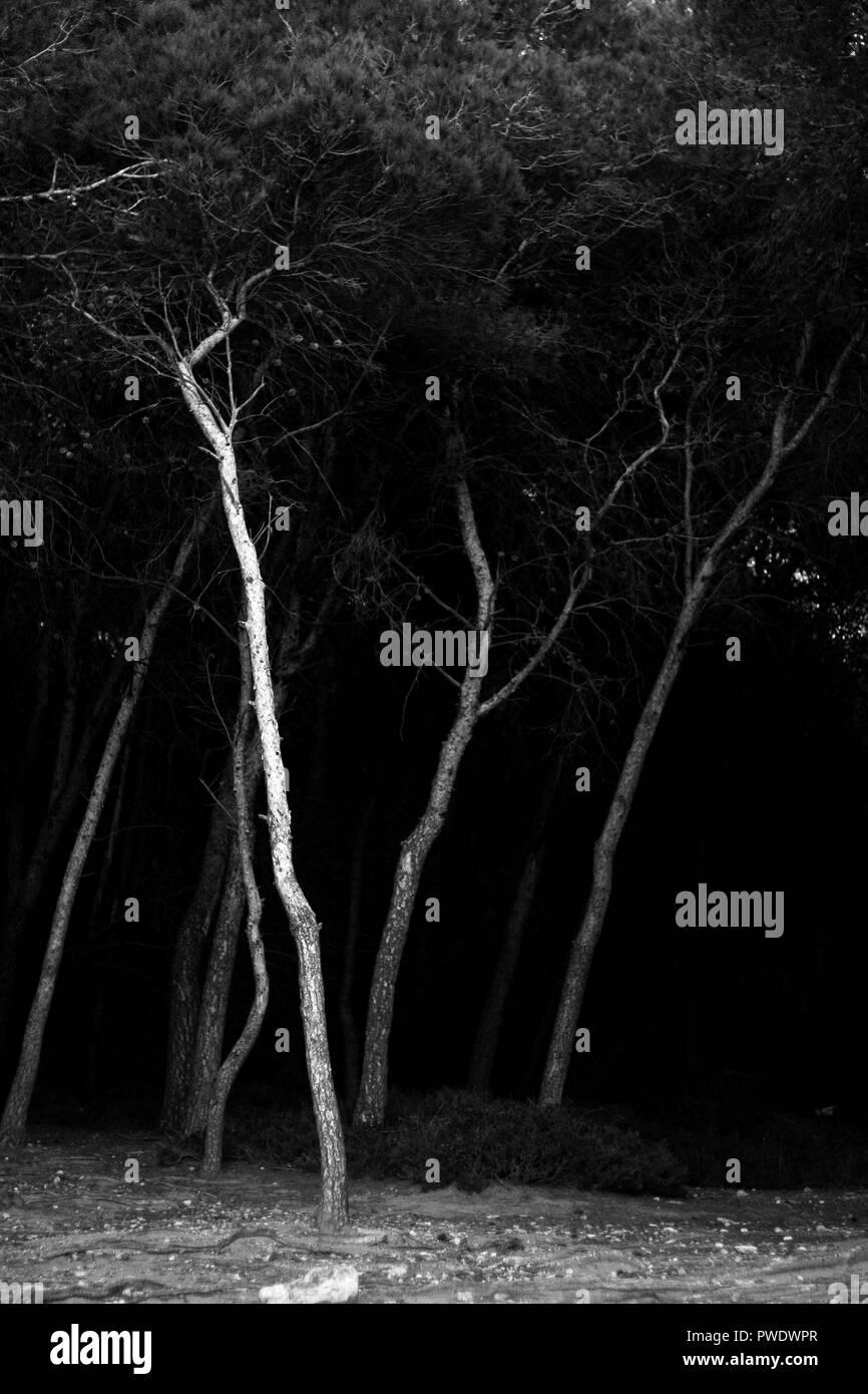 Woods between Tamarit and Altafulla, Altafulla, Tarragones, Tarragona, Spain - Stock Image