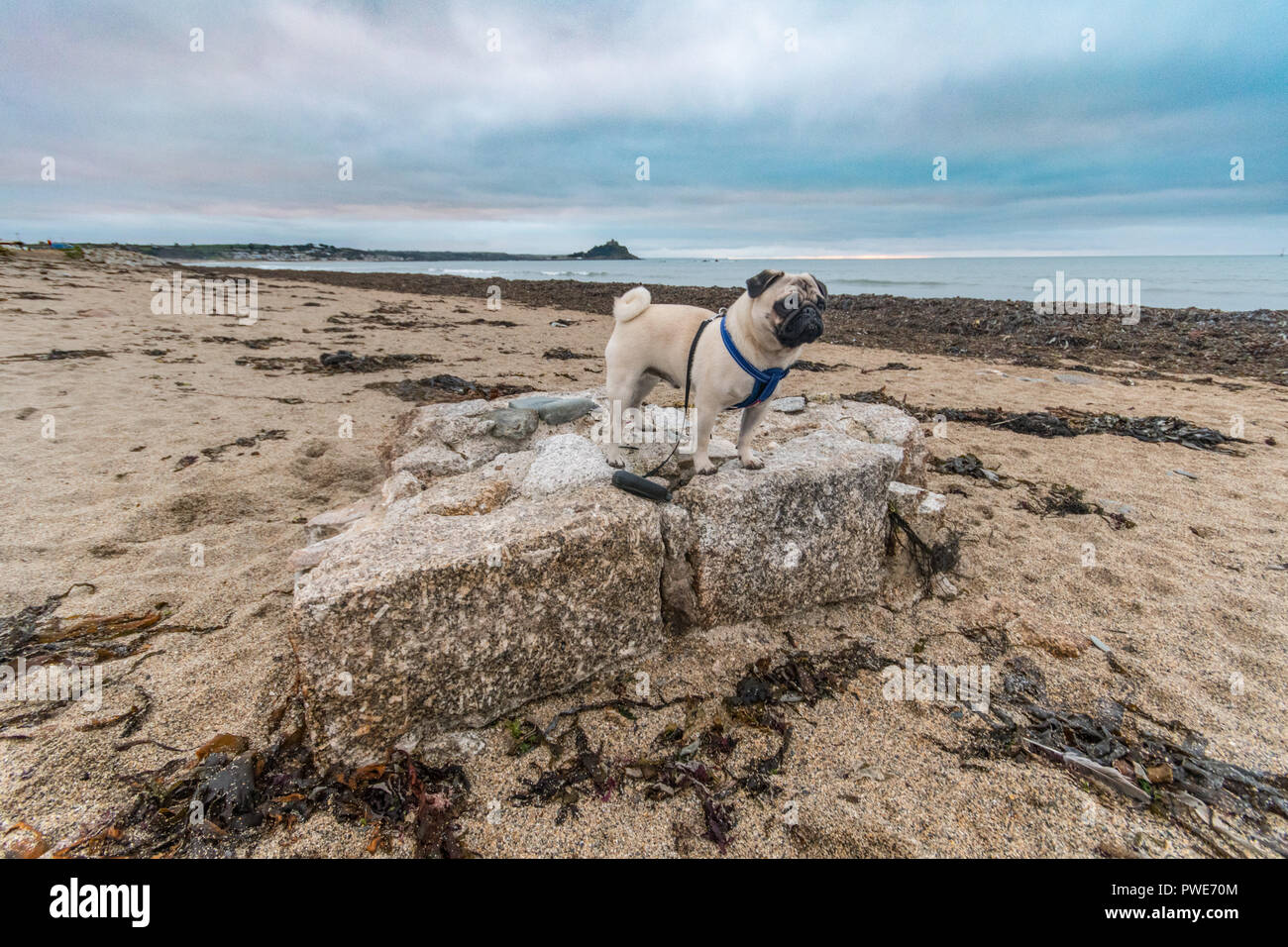 Longrock, Cornwall, UK. 16th October 2018. UK Weather. In the aftermath of Storm Callum part of a granite wall was found on the beach at Longrock. Estimated to weigh over 8 tons, it shows the power of the storm and waves that pounded the Cornish coast. Standing onthe rock is Titan the pug out for his morning walk at sunrise. Credit: Simon Maycock/Alamy Live News Stock Photo
