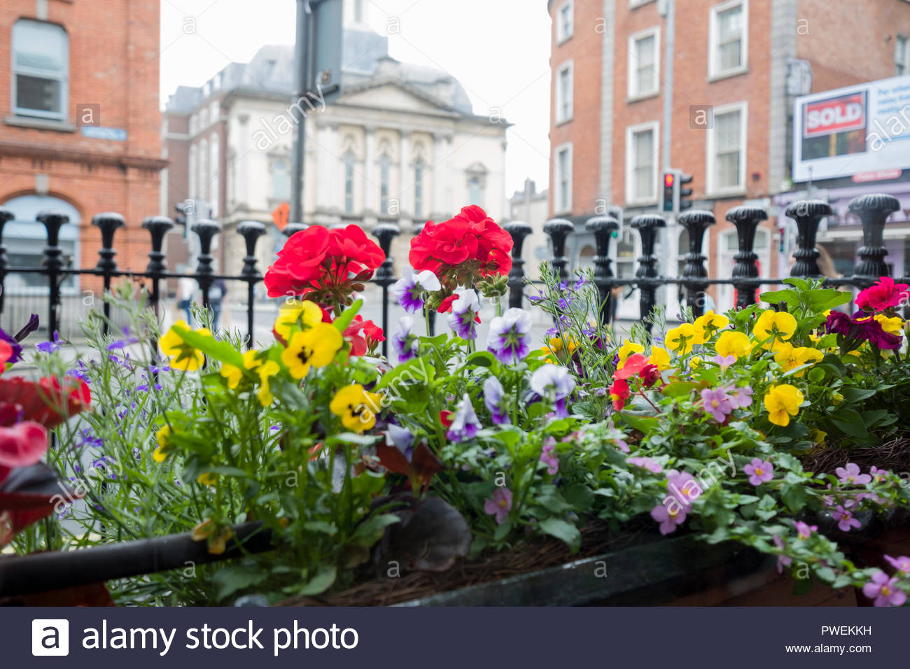 Colorful flowers in window box outside Kennedy's Pub and Station, Westland Row, Dublin, Leinster, Ireland - Stock Image