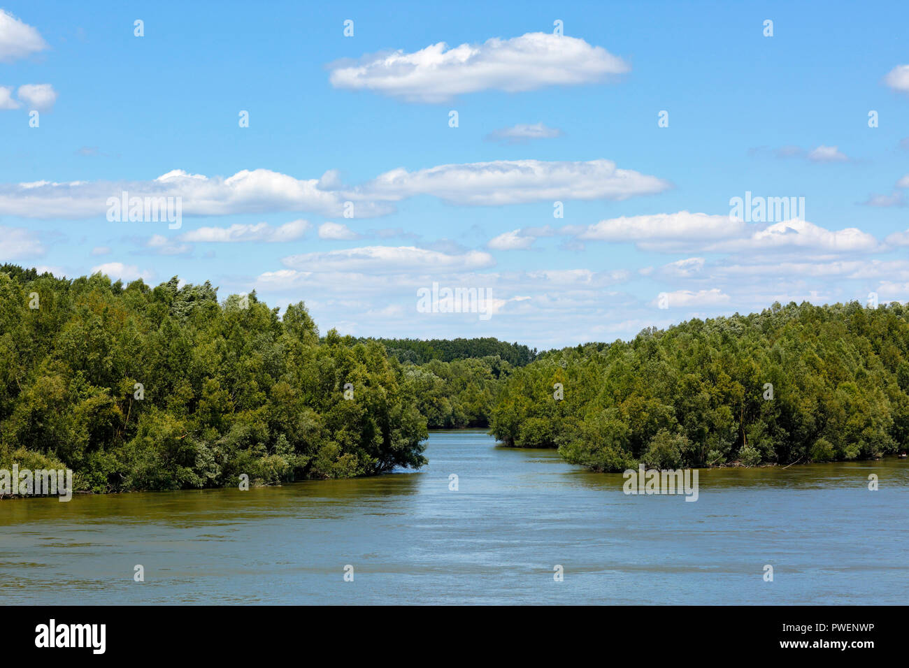 Hungary, Kandafok on the Danube between Mohacs and Dunaszekcsoe, Transdanubia, Southern Transdanubia, Baranya county, Danube-Drava National Park, Danube landscape, river landscape, holm, woodlands, alluvial forest, tributary stream, cumulus clouds - Stock Image