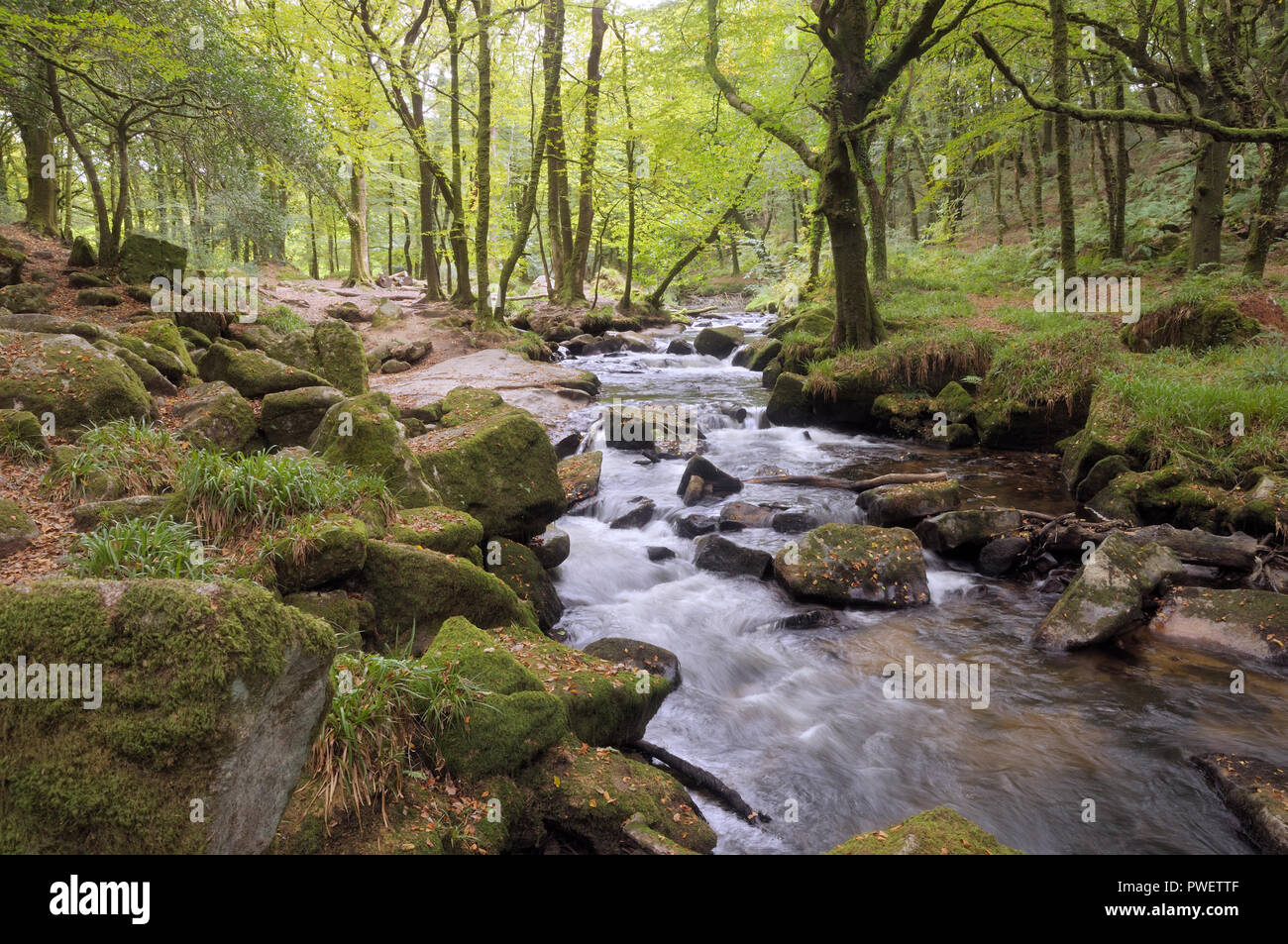 Golitha Falls on the River Fowey, Bodmin Moor, Cornwall, UK - Stock Image