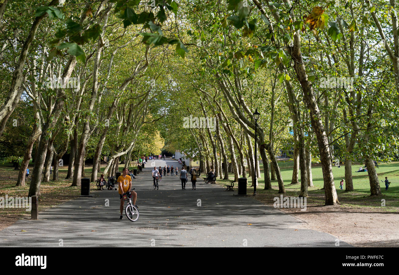 An avenue of London Plane trees, Crystal Palace Park, London, UK Stock Photo