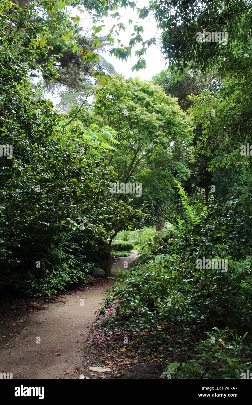 A dirt path meandering through green shrubbery and trees in a park in San Francisco, California, USA - Stock Image