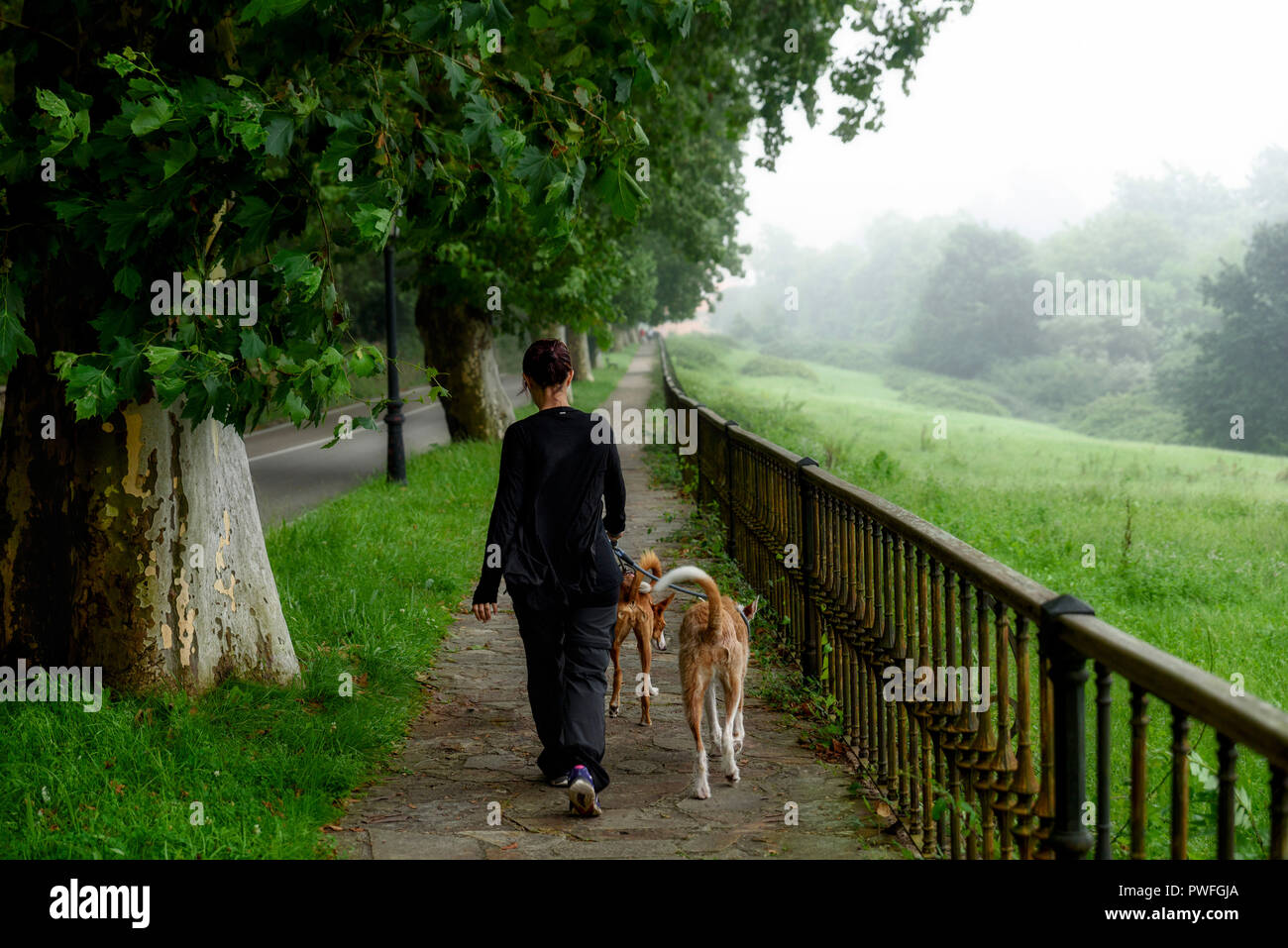 Mysterious path in a foggy day - Stock Image