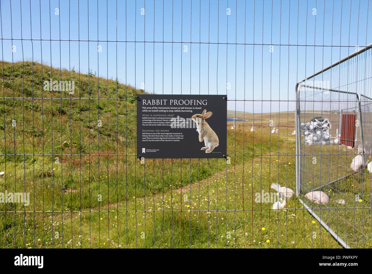 Part of the Ring of Brodgar site, Orkney closed to install rabbit proof netting as rabbits are damaging Salt Knowe - Stock Image