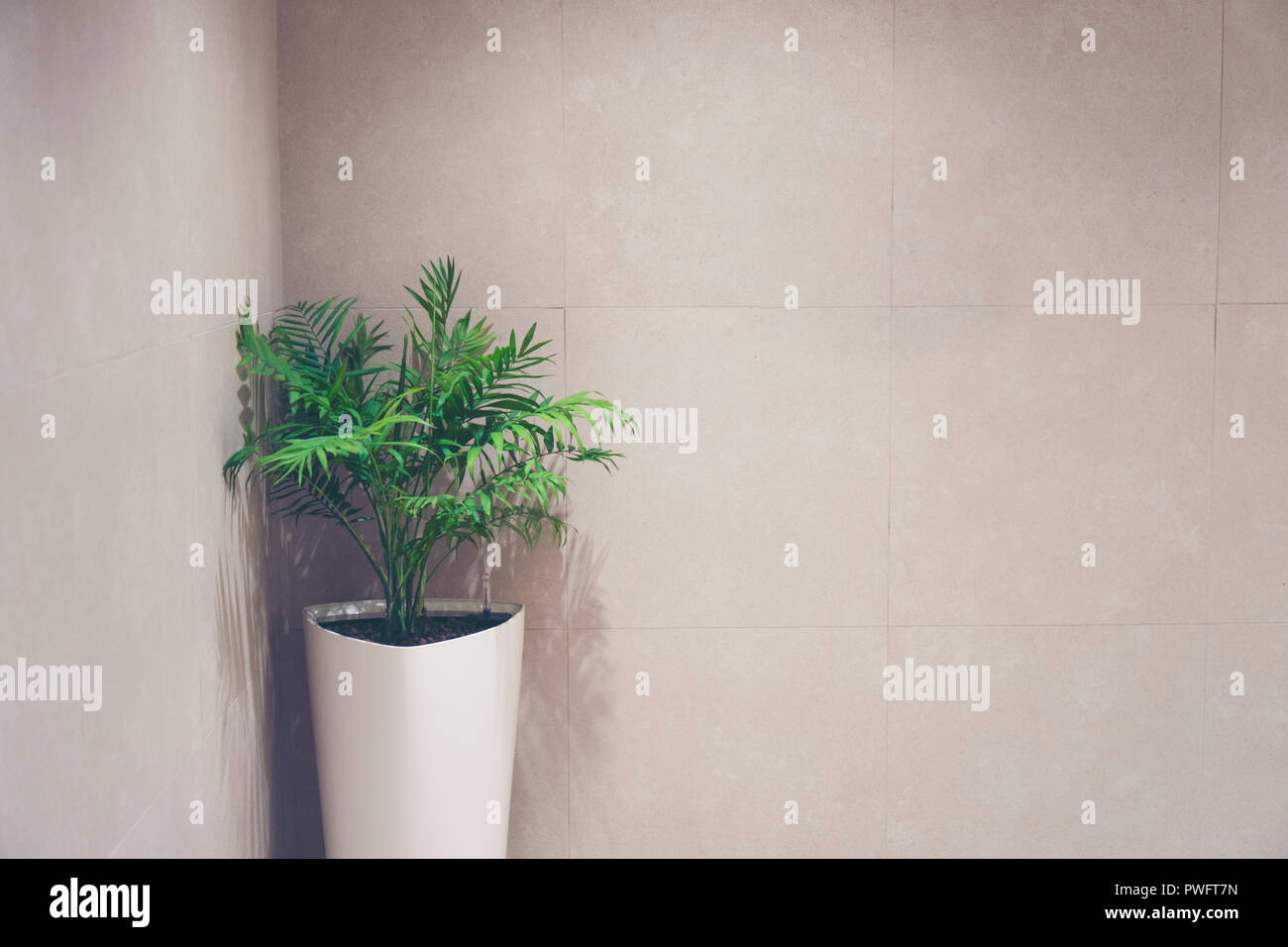 green Shrub tree with space - Stock Image