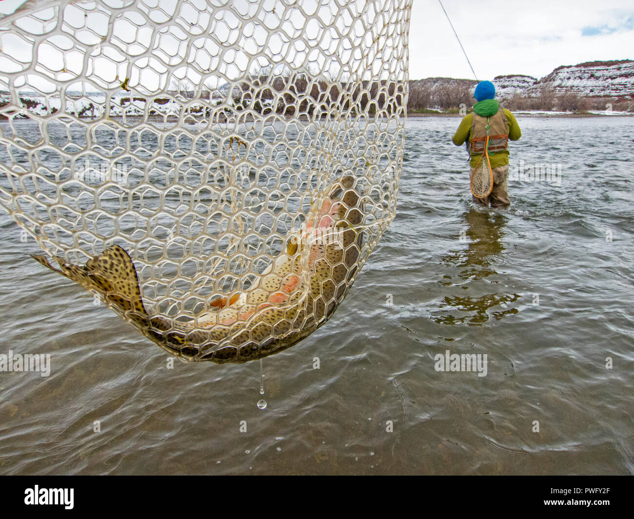 Fly fishing for trout on the North Platte River in Wyoming, USA - Stock Image