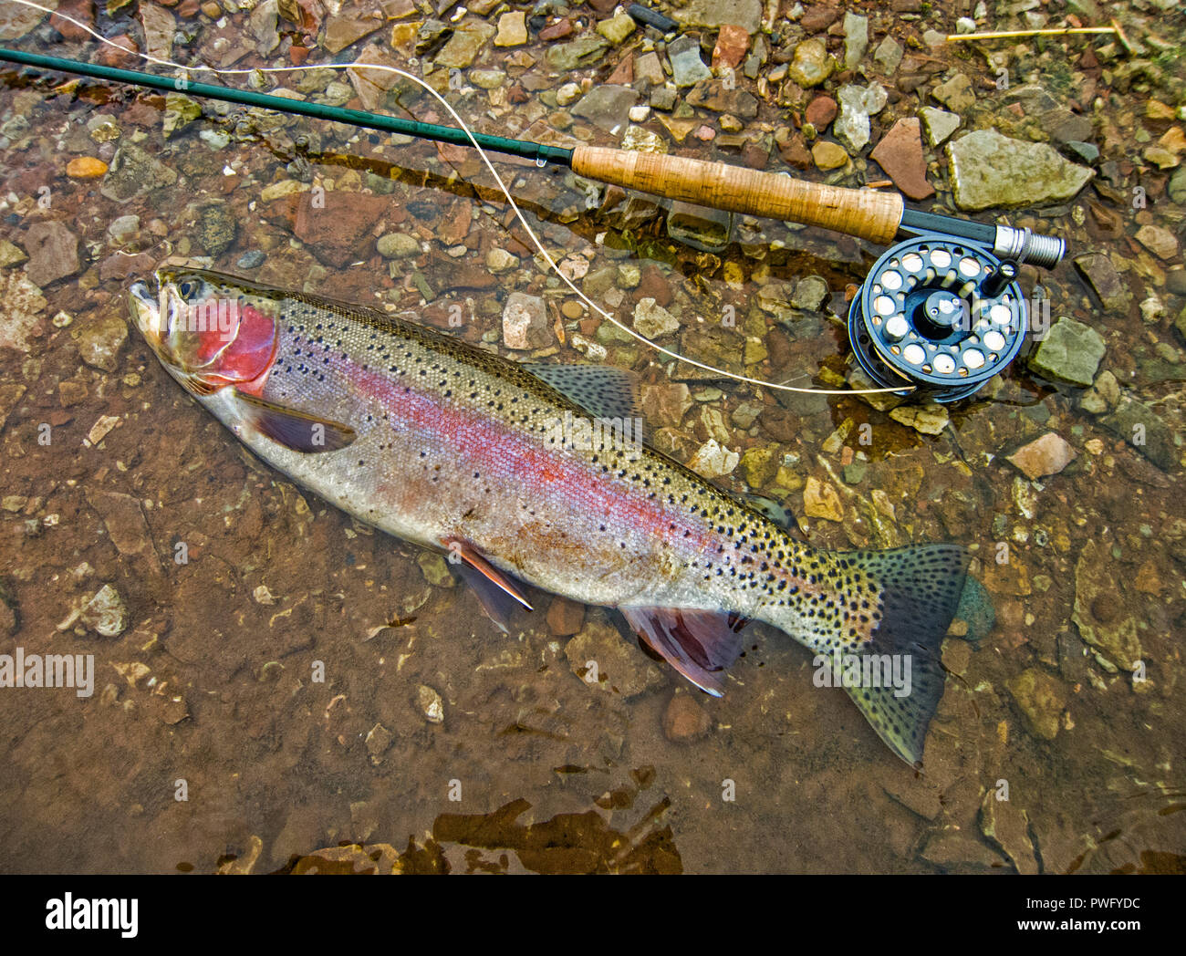 Freshwater fly fishing for trout and salmon. - Stock Image