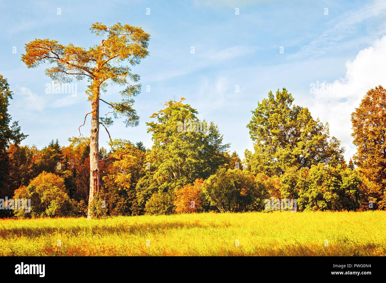 Autumn October landscape - colorful autumn forest with deciduous trees in sunny weather. Autumn landscape in vintage tones - Stock Image