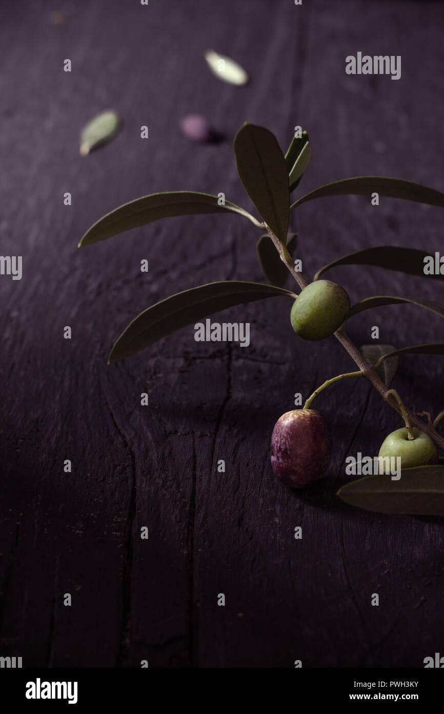Frische Oliven am Ast auf dunklem Untergrund - Stock Image