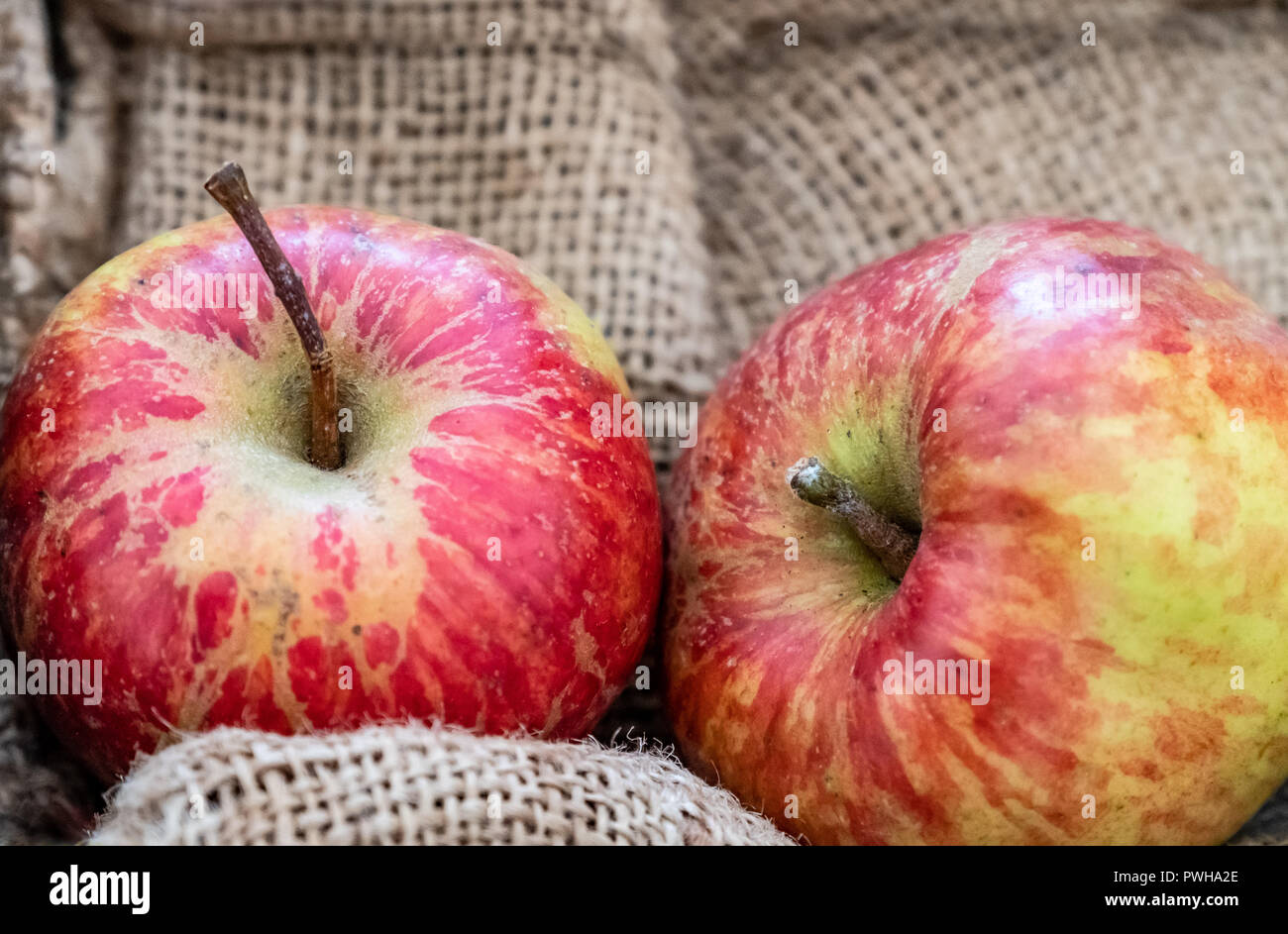 Red English eating apples.  October 2018 - Stock Image