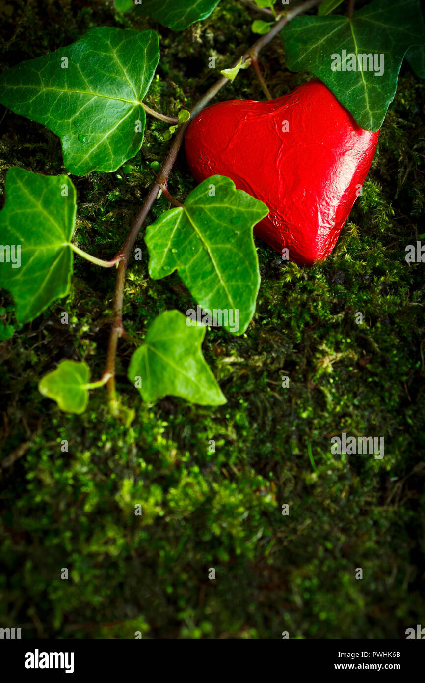 Chocolate heart in bright red foil wrapper on dark green moss and ivy leaves, symbol of fidelity. Romantic background texture, copy space - Stock Image