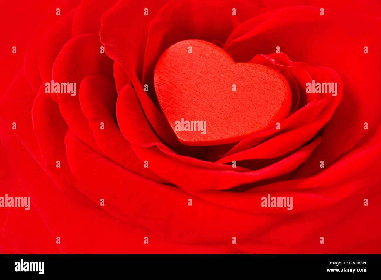 Valentines Day Greeting Card Red Rose Stock Photos Valentines Day