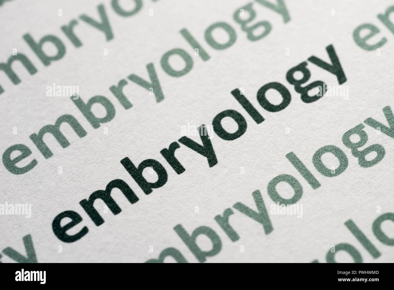 word embryology printed on whte paper macro - Stock Image