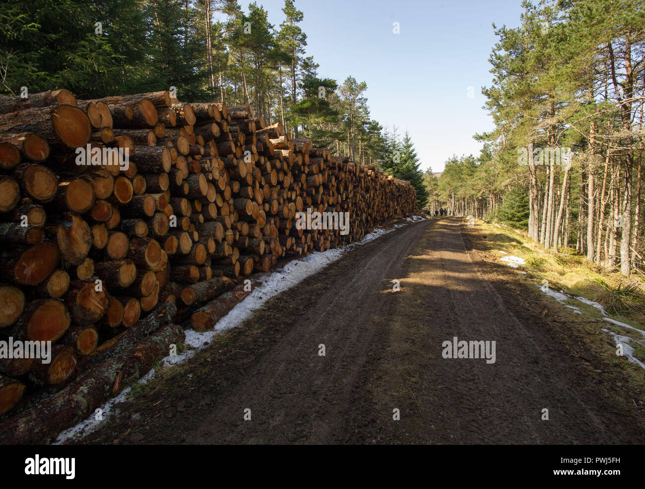 Forestry commission operation in Clashindarroch Forest near Huntly, Aberdeenshire. - Stock Image
