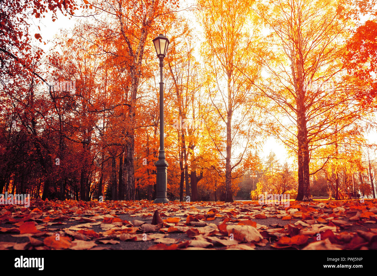 Autumn city landscape. Autumn trees in sunny autumn park lit by sunshine and fallen maple leaves on the foreground. Autumn city park scene Stock Photo
