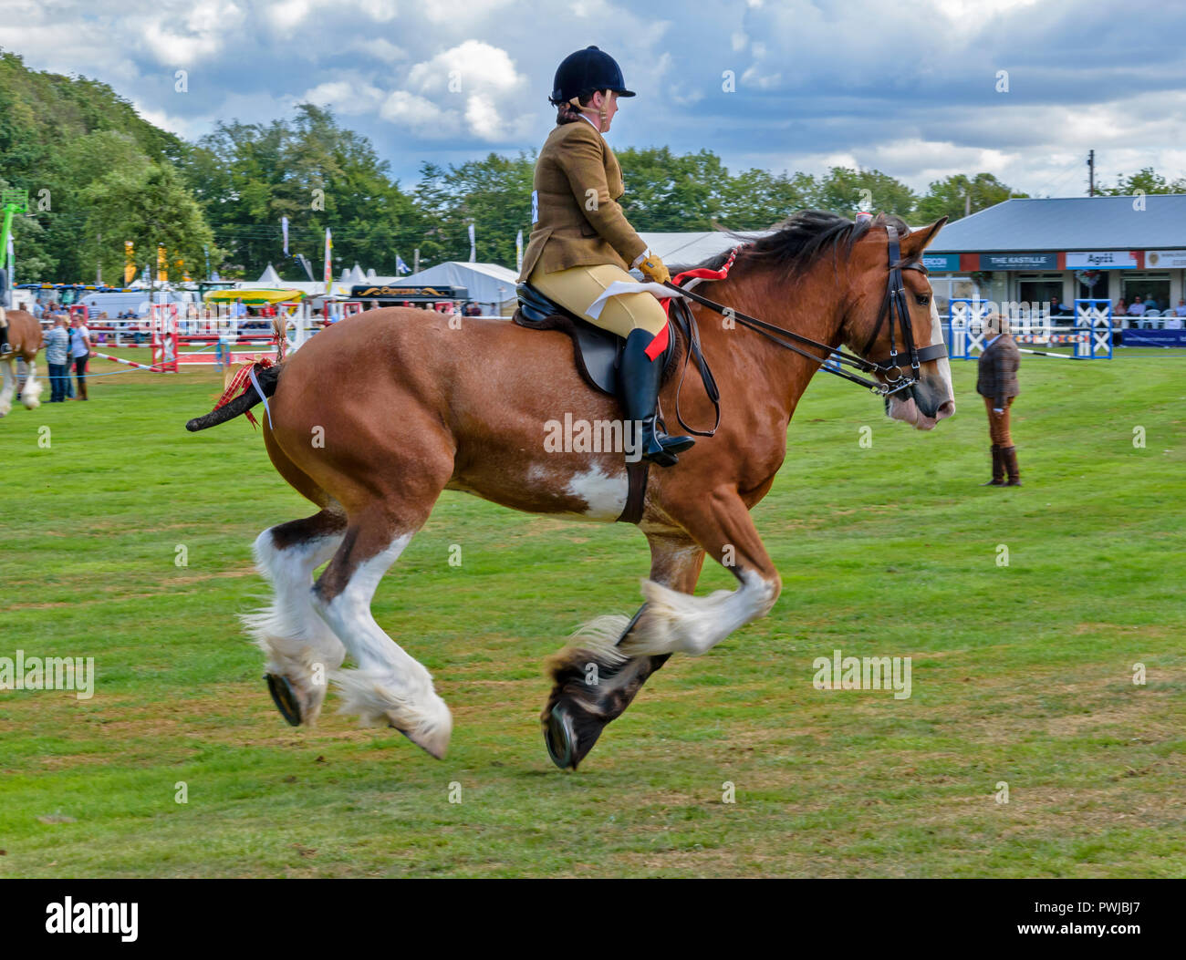 Clydesdale Horse Gallop High Resolution Stock Photography And Images Alamy