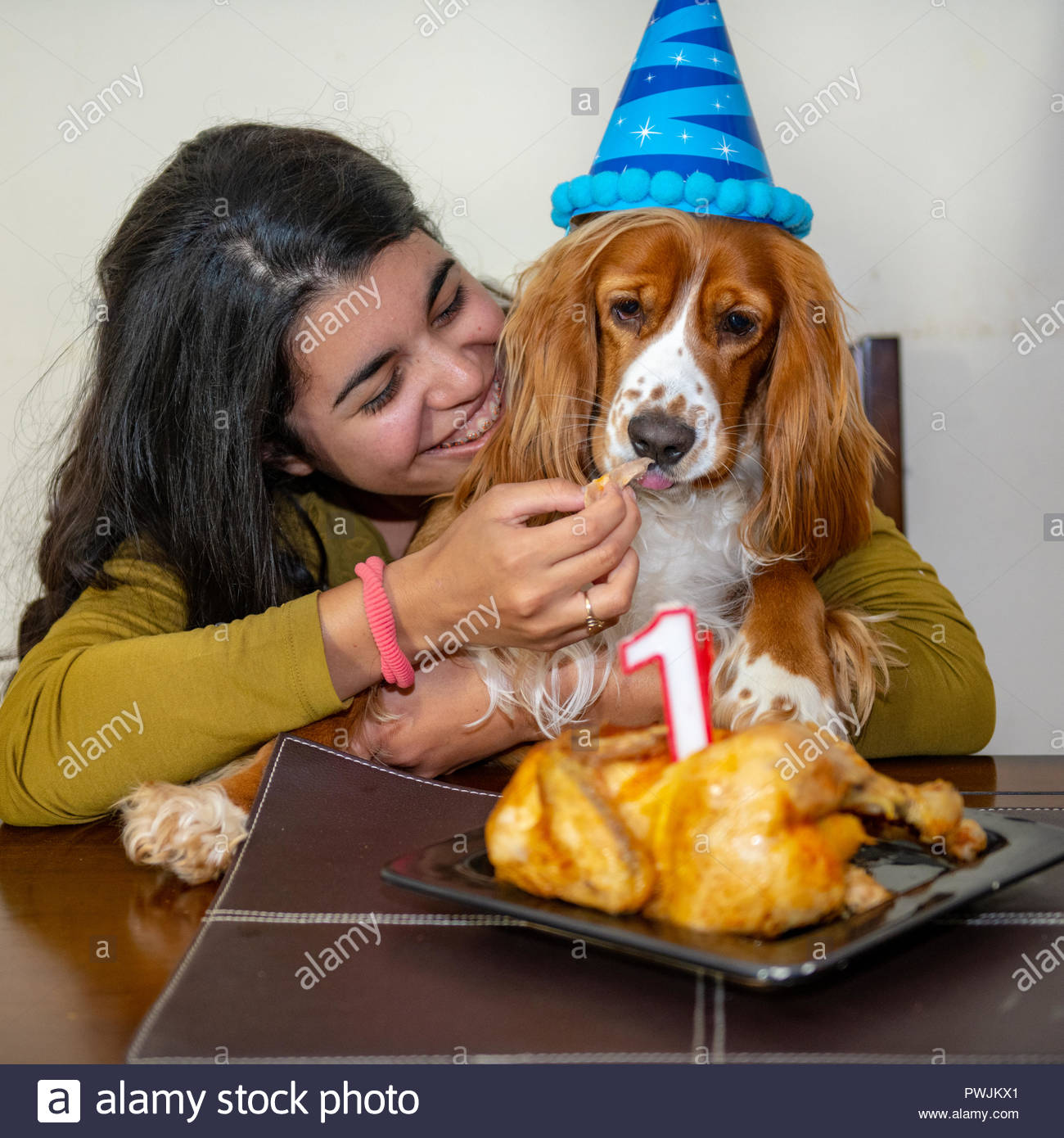 Young Adult Woman Celebrating The First Anniversary Of Her Cocker Spaniel Dog Pet Animal Has A Birthday Hat And Candle Over Roasted Chicken