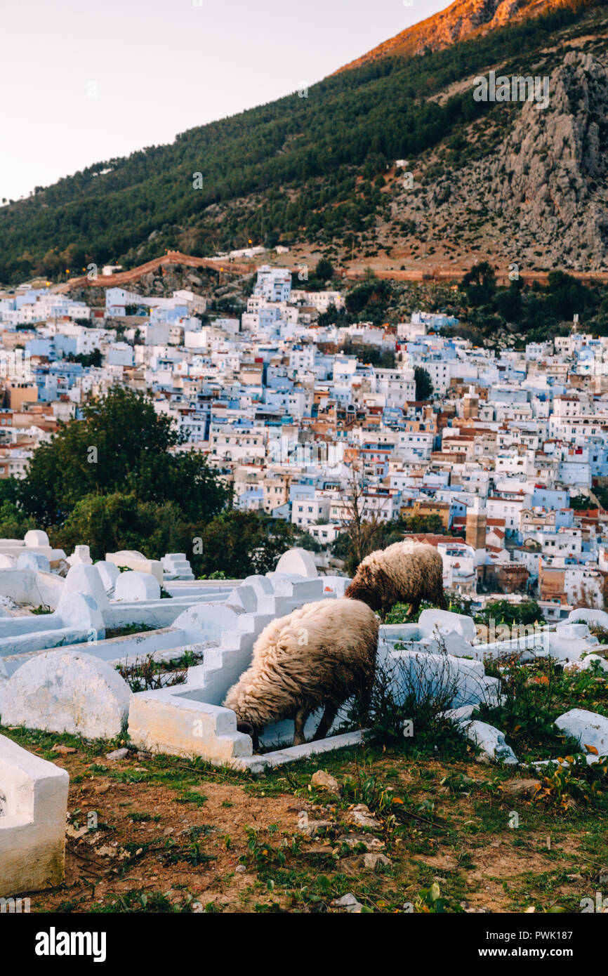 City Skyline, Chefchaouen, Morocco, 2018 - Stock Image