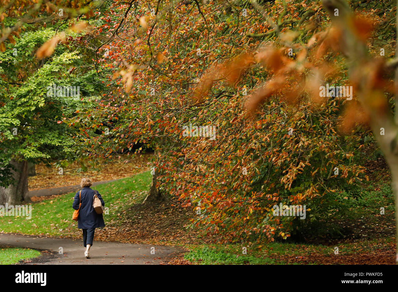 Battersea Park, London. 17th Oct 2018. UK Weather: A woman walks among the colourful autumn leaves in Battersea Park in London, Wednesday October 17, 2018. Photograph : © Luke MacGregor Credit: Luke MacGregor/Alamy Live News Stock Photo