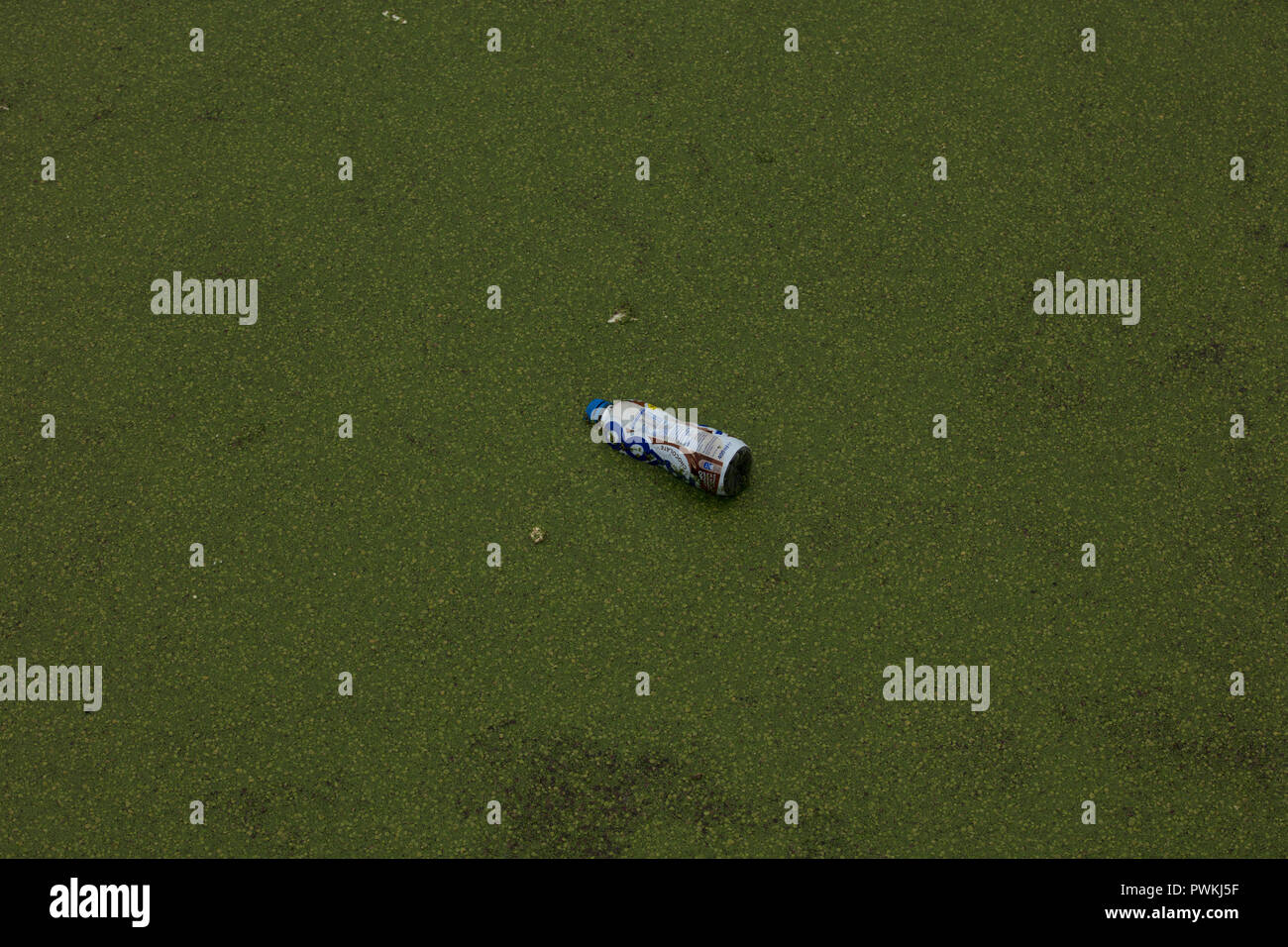 Plastic beverage bottle floats in the water of Limehouse Basin, London, UK, increasing pollution of canals, rivers and seas, needing urgent solutions. - Stock Image