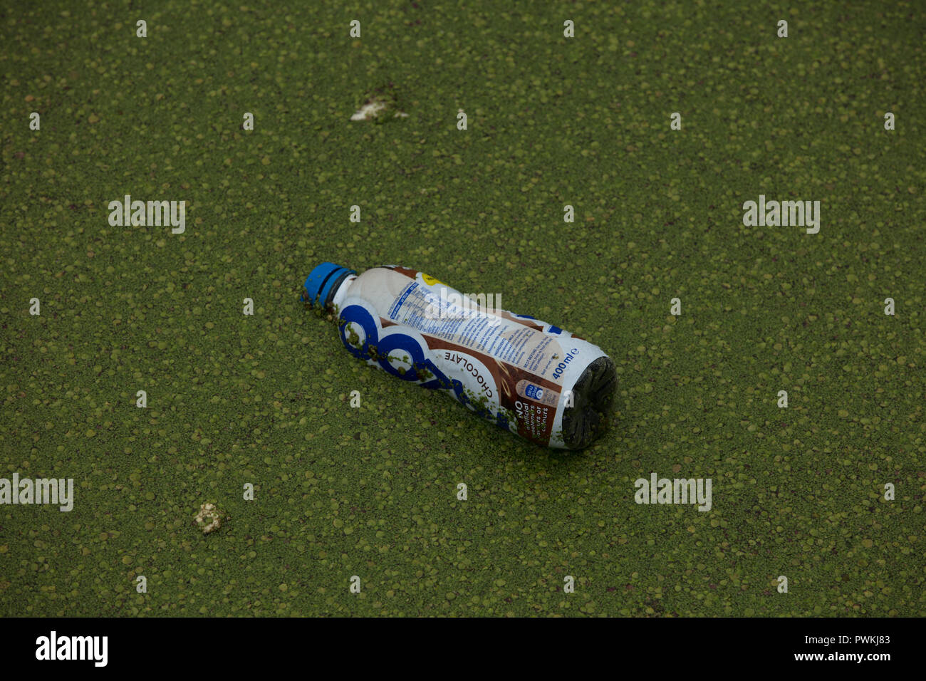 Plastic beverage bottle floats in the water of Limehouse Basin, London, UK increasing pollution of canals, rivers and seas, needing urgent solutions. - Stock Image