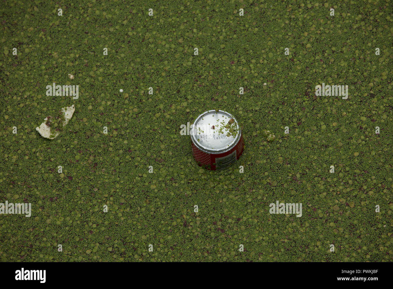 Turned over beverage can floating in the water of Limehouse Basin London, UK increasing pollution of canals, rivers and seas, needing urgent solutions - Stock Image