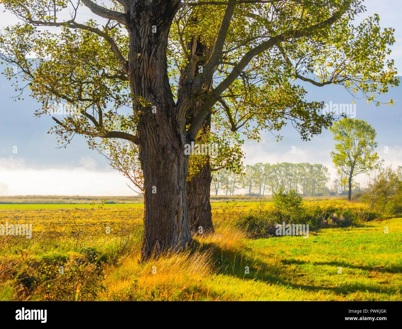 Morning country-side landscape - Stock Image