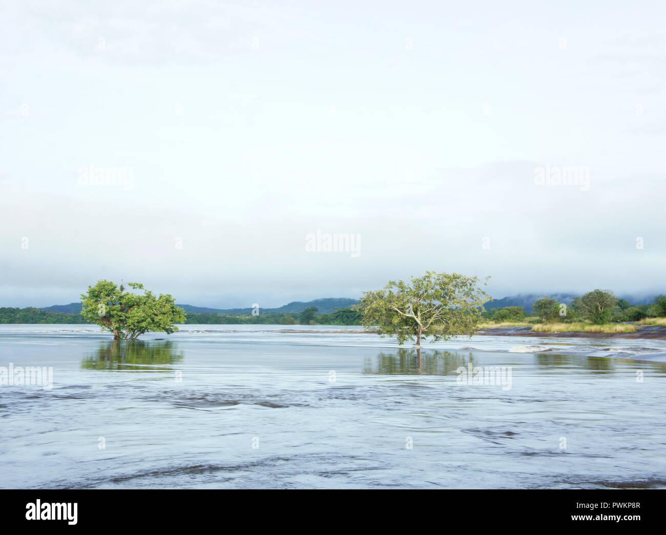 Landscape photography of the Amazon region in Venezuela. High tide water. - Stock Image