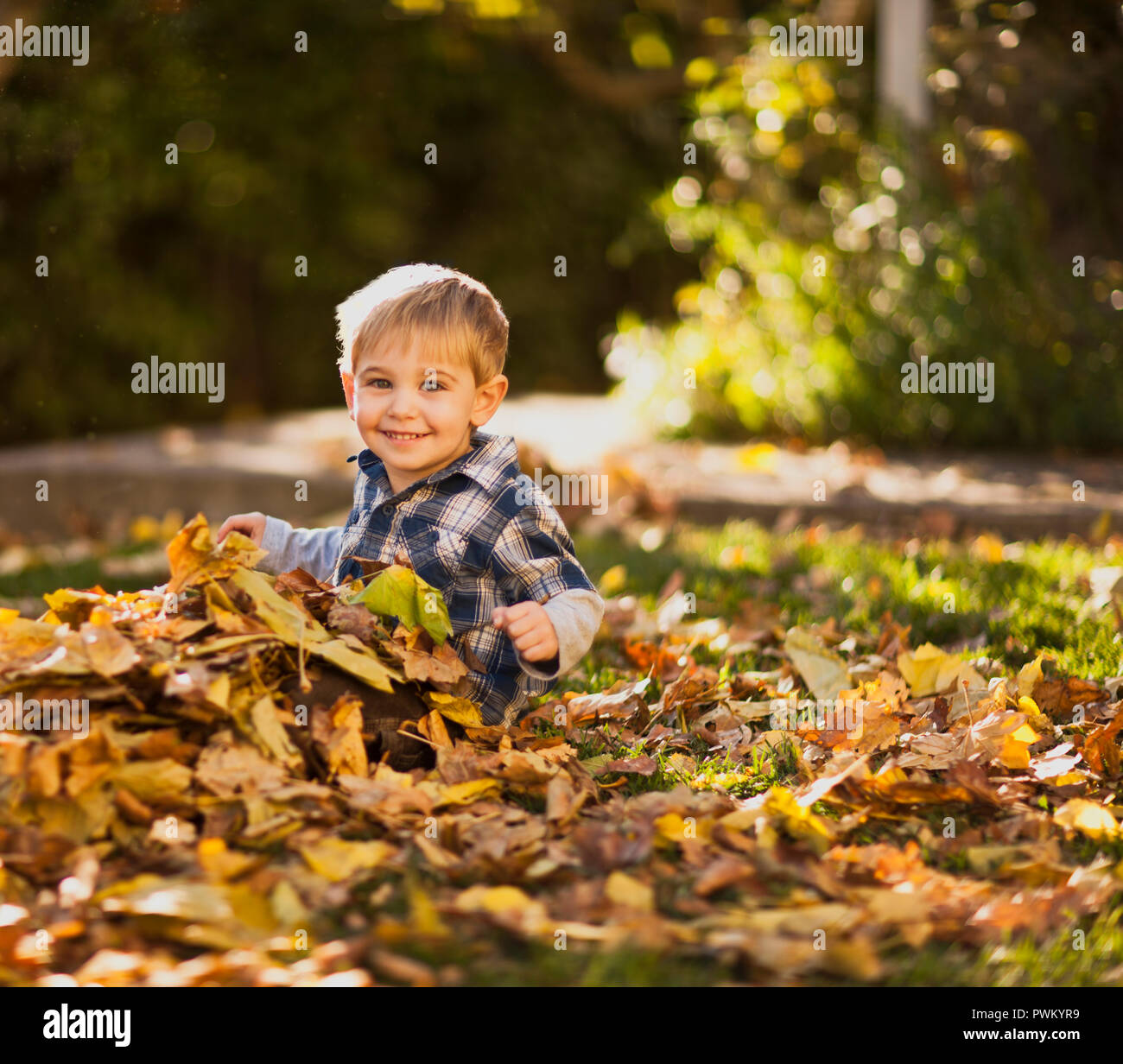 Little boy having fun sitting in a pile of leaves in the backyard. Stock Photo
