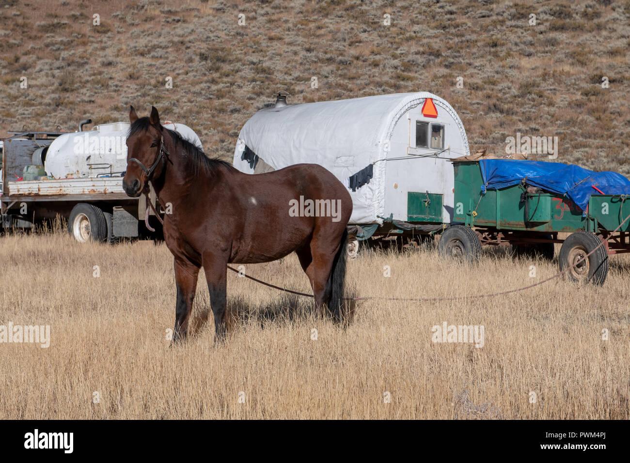 Sheepherder wagon and horse in Idaho - Stock Image