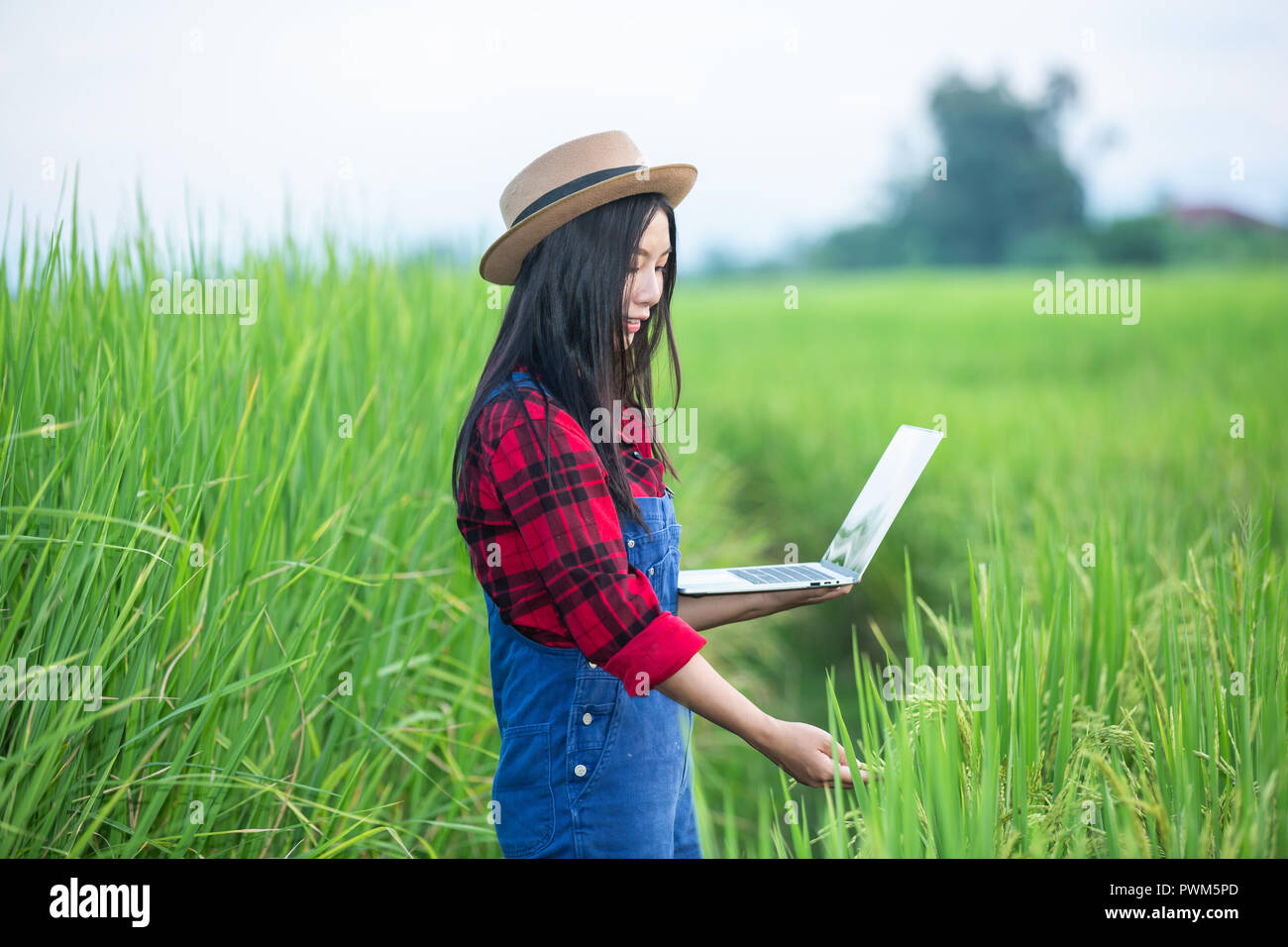 Farmer Woman Rice Plantation Checking Quality Concept Of Smart Agriculture And Modern Technology Stock Photo Alamy