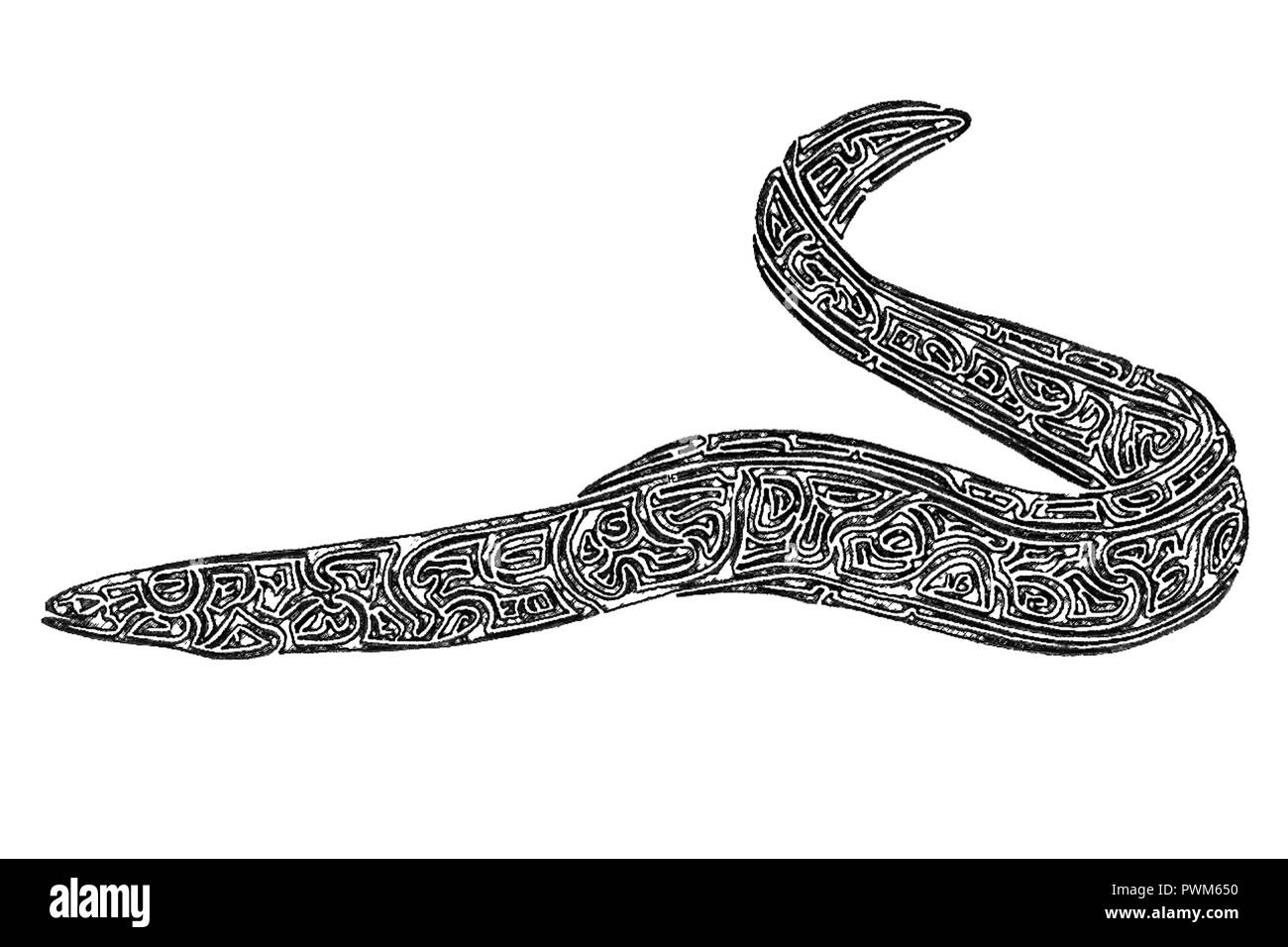 Illustration of an eel, black and white, drawing, maze lines - Stock Image