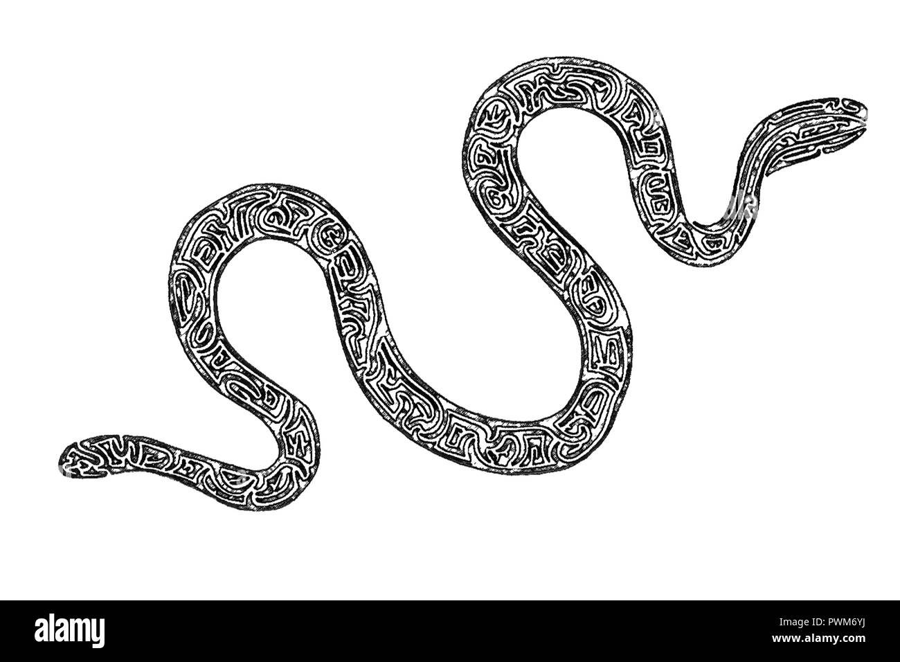 Illustration of a Sea krait, black and white, drawing, maze lines - Stock Image