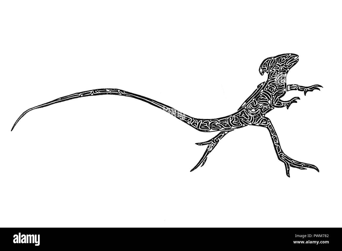 Illustration of a male Plumed basilisk running on 2 legs black and white, drawing Stock Photo