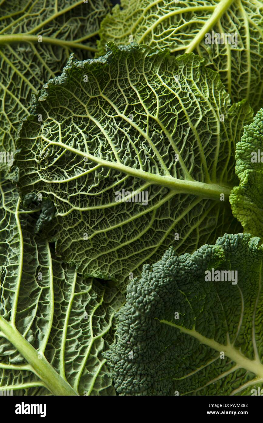 Close Up Detail Shot Of Savoy Cabbage Leaves Stock Photo Alamy