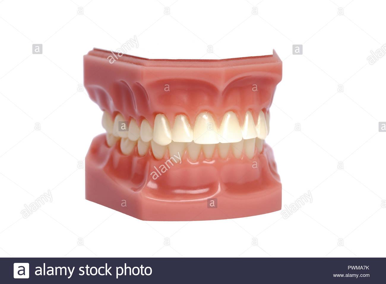 Dentistry   Top Universities
