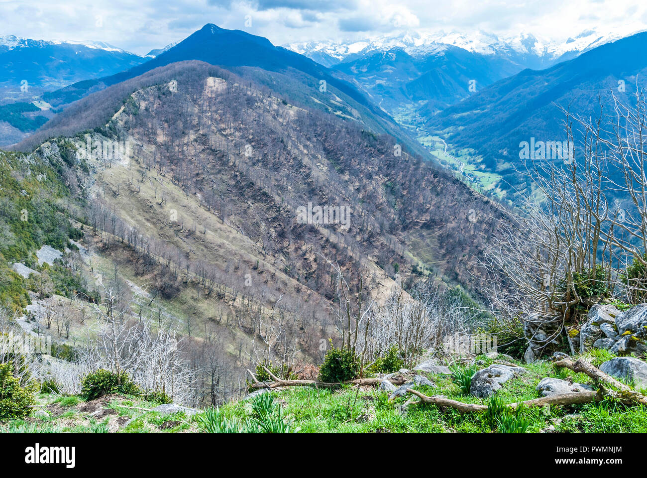France, Pyrenees Ariegeoises Regional nature Park, Garbet Valley, trees decimated by a rocksilde - Stock Image