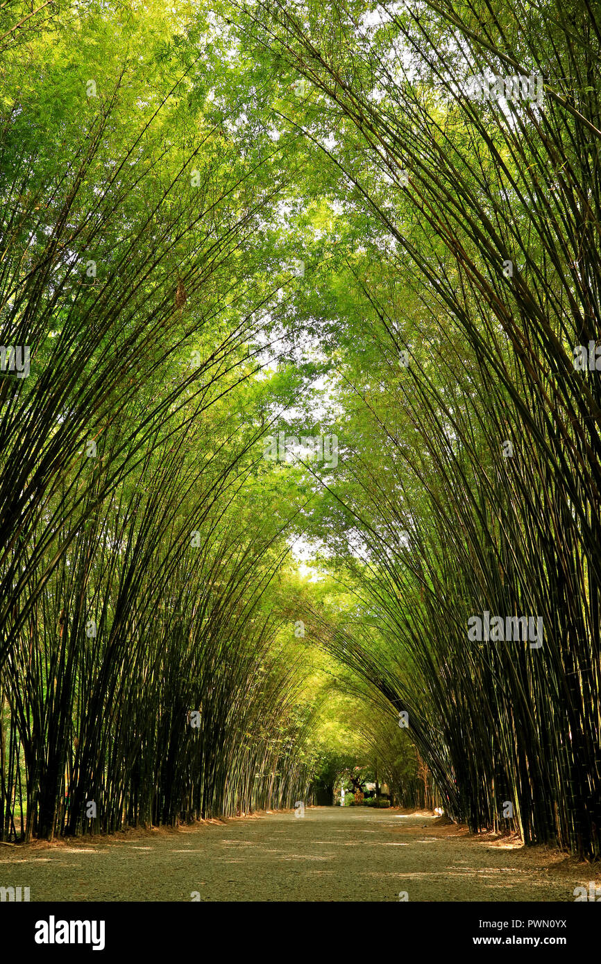 Natural Bamboo Tree Arch over the Walkway to the Entrance of Chulapornwanaram Temple in Nakornnayok Province, Thailand Stock Photo