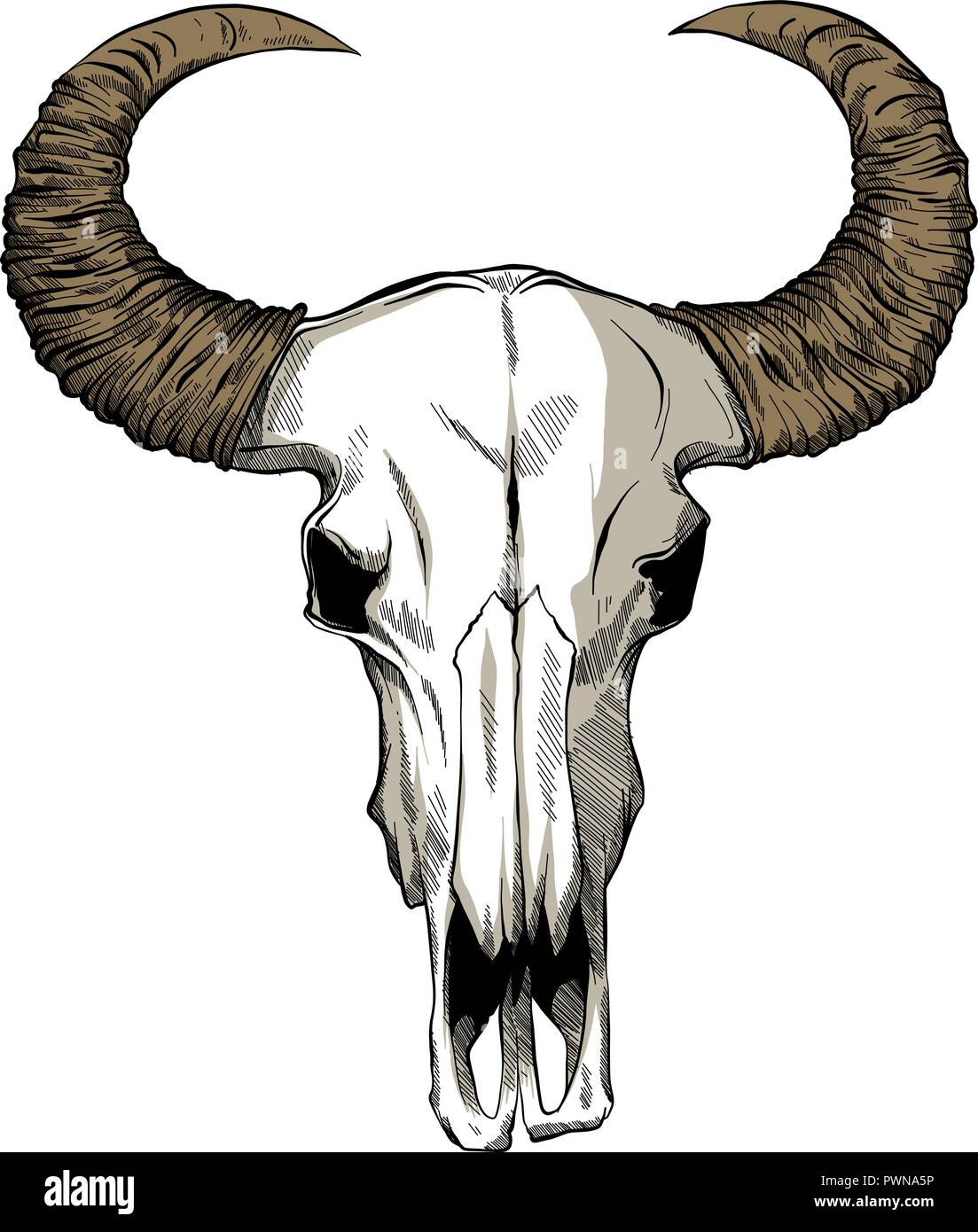 Illustration with goat skull. Hand drawn. Vector. - Stock Image
