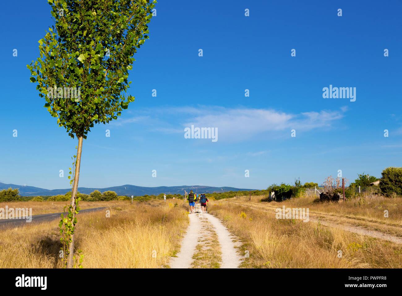 Camino de Santiago (Spain) - Pilgrims along the way of St.James, in the spanish meseta - Stock Image