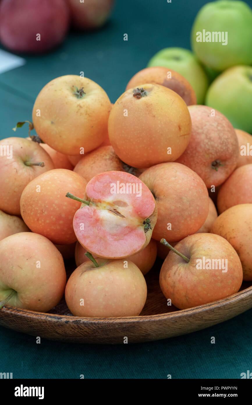 Pink Sunburst apple / Malling Sunburst. New sweet-tasting apple variety on display at at RHS Malvern Autumn show. Worcestershire, England. 2018 - Stock Image