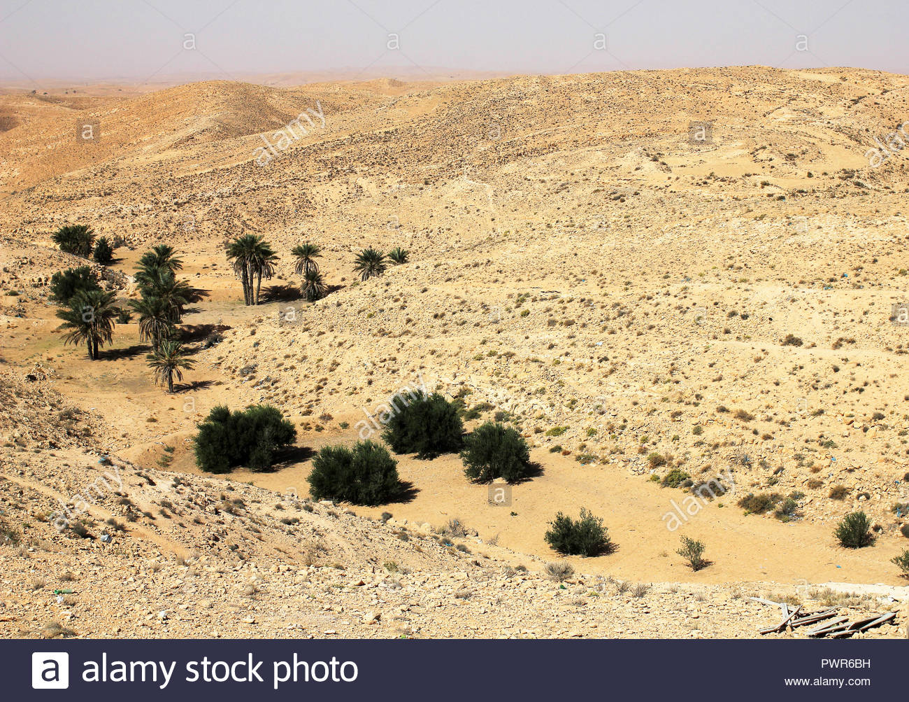 Photo of sandy Sahara desert in Tunisia with bushes in oasis - Stock Image