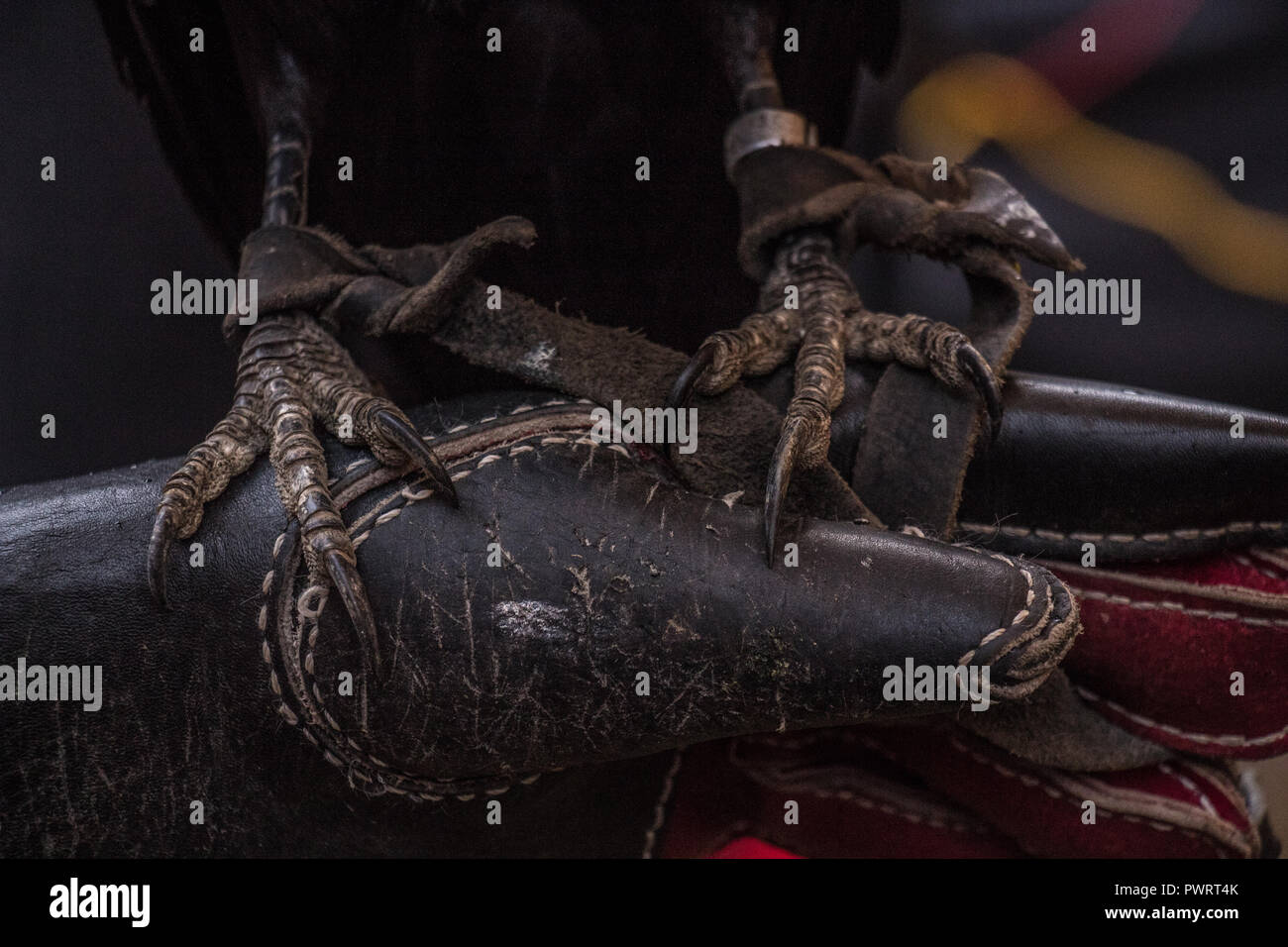 black crow claw detail - Stock Image
