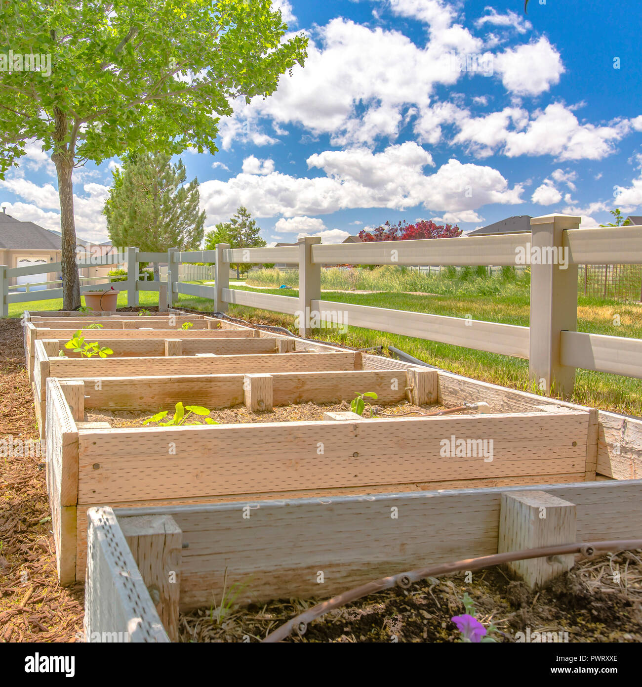 Backyard with seedling boxes and a scenic view - Stock Image