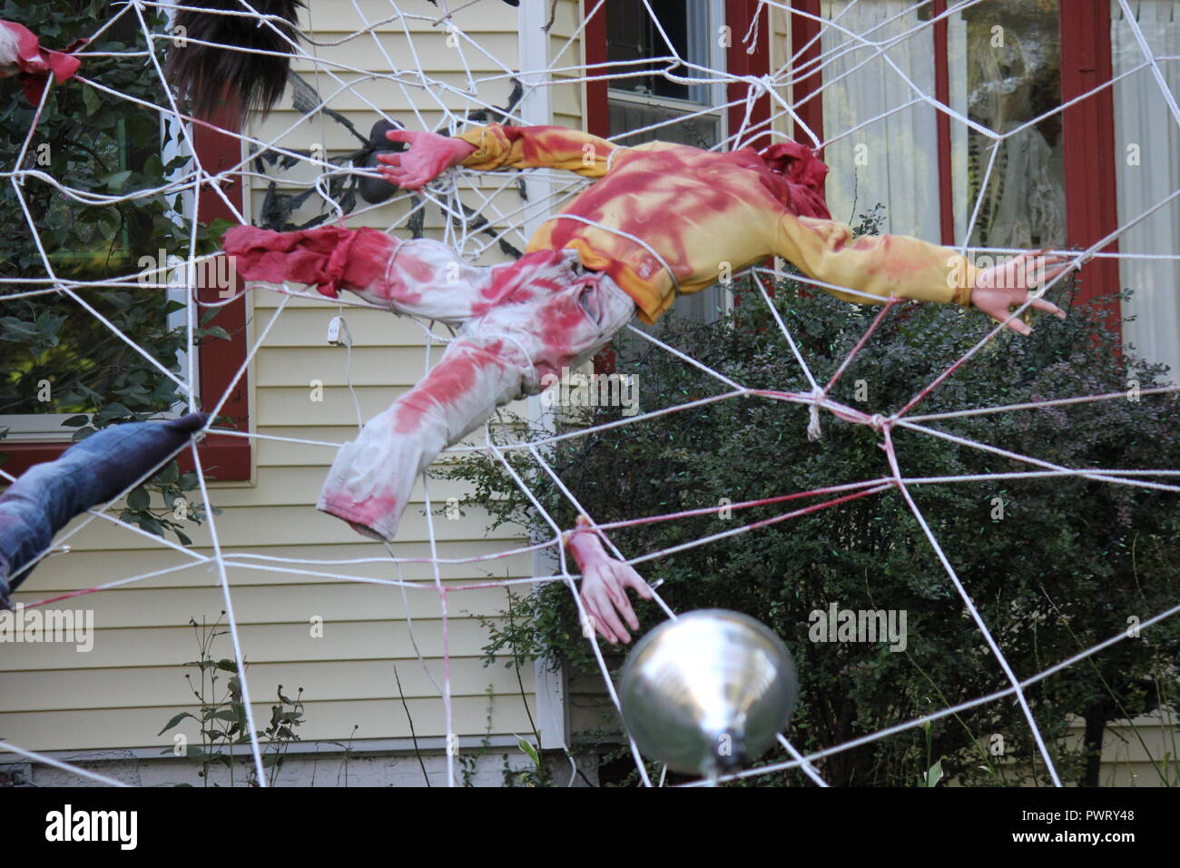 Nightmare Spiders High Resolution Stock graphy and