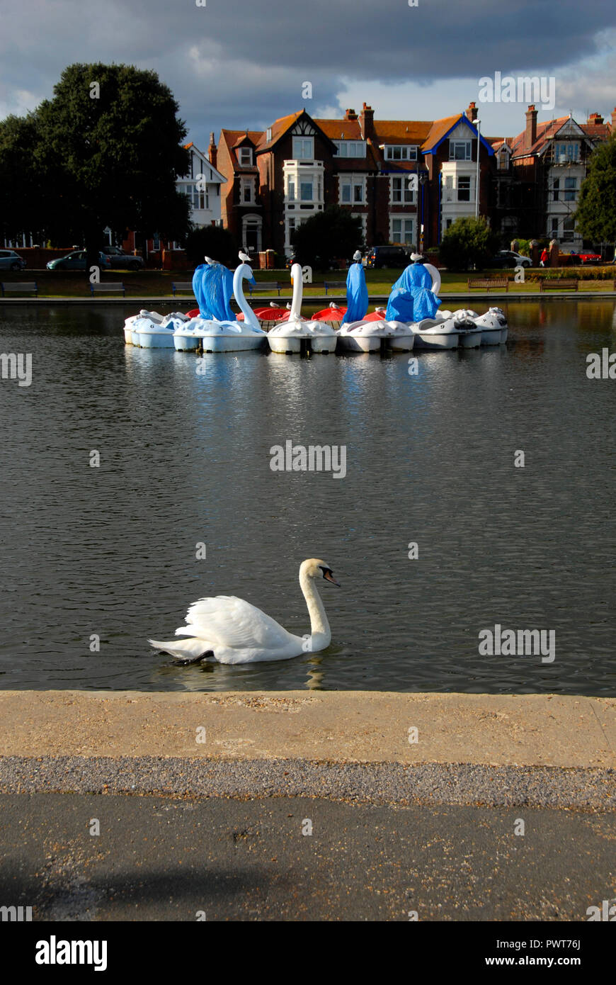 Pedalos in the shape of swans, Canoe Lake, Southsea, Porstmouth, Hampshire, England, partly covered as out of season Stock Photo