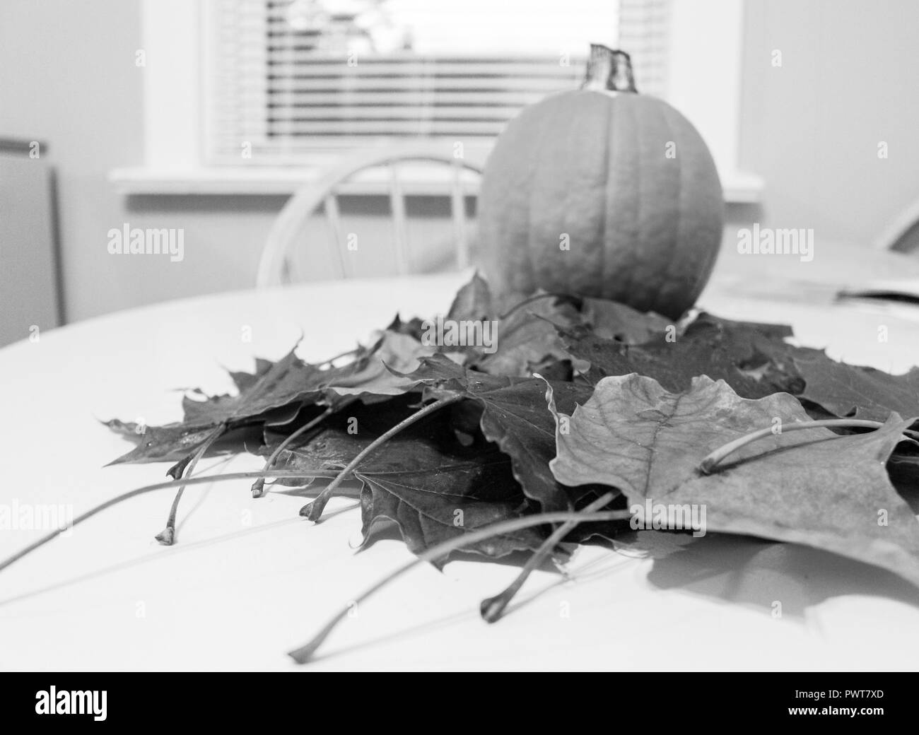 black and white photo of fall leaves and a pie pumpkin on kitchen table - Stock Image
