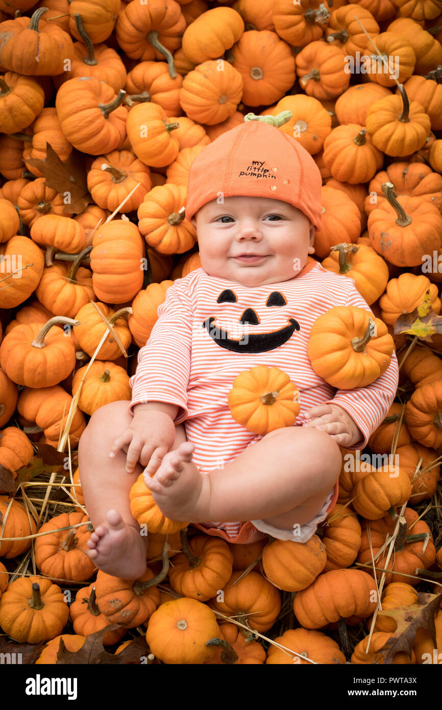 Baby Halloween Pumpkin.Autumn Fall Halloween Pumpkin Baby Stock Photo Alamy